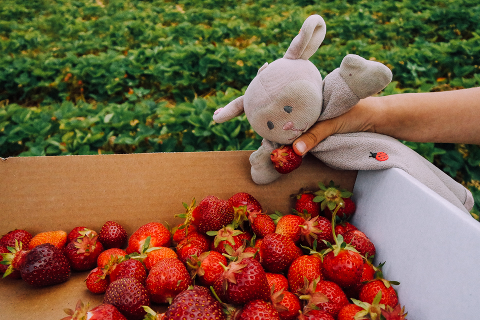 june 14- strawberry picking-3158